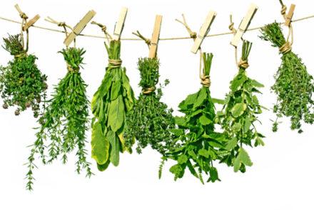 ASTUCES DE CUISINE : Comment faire pour raviver des herbes aromatiques un peu flétries?
