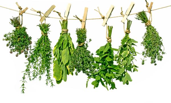 Comment faire pour raviver des herbes aromatiques un peu fl tries les astuces de cuisine - Herbes aromatiques cuisine liste ...